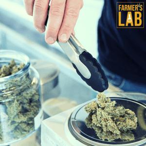 Marijuana Seeds Shipped Directly to Big Lake, MN. Farmers Lab Seeds is your #1 supplier to growing Marijuana in Big Lake, Minnesota.