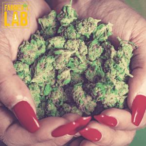 Marijuana Seeds Shipped Directly to Birmingham, MI. Farmers Lab Seeds is your #1 supplier to growing Marijuana in Birmingham, Michigan.