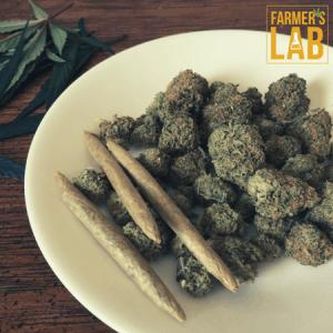 Marijuana Seeds Shipped Directly to Blaine, MN. Farmers Lab Seeds is your #1 supplier to growing Marijuana in Blaine, Minnesota.