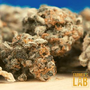 Marijuana Seeds Shipped Directly to Blair, NE. Farmers Lab Seeds is your #1 supplier to growing Marijuana in Blair, Nebraska.