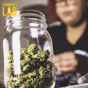 Marijuana Seeds Shipped Directly to Boynton Ridge, GA. Farmers Lab Seeds is your #1 supplier to growing Marijuana in Boynton Ridge, Georgia.