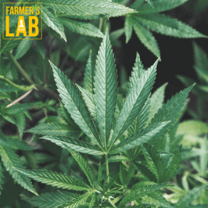Marijuana Seeds Shipped Directly to Cap-Chat, QC. Farmers Lab Seeds is your #1 supplier to growing Marijuana in Cap-Chat, Quebec.