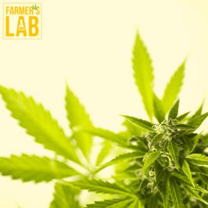 Marijuana Seeds Shipped Directly to Dublin, GA. Farmers Lab Seeds is your #1 supplier to growing Marijuana in Dublin, Georgia.