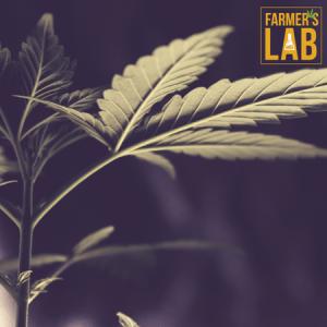 Marijuana Seeds Shipped Directly to Emporia, KS. Farmers Lab Seeds is your #1 supplier to growing Marijuana in Emporia, Kansas.