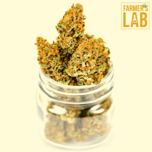 Marijuana Seeds Shipped Directly to Eustis, FL. Farmers Lab Seeds is your #1 supplier to growing Marijuana in Eustis, Florida.