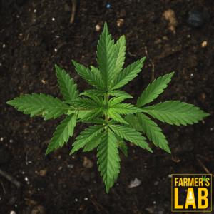 Marijuana Seeds Shipped Directly to Farmingville, NY. Farmers Lab Seeds is your #1 supplier to growing Marijuana in Farmingville, New York.