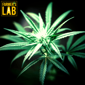 Marijuana Seeds Shipped Directly to Fort Drum, NY. Farmers Lab Seeds is your #1 supplier to growing Marijuana in Fort Drum, New York.