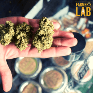 Marijuana Seeds Shipped Directly to Fort Meade, MD. Farmers Lab Seeds is your #1 supplier to growing Marijuana in Fort Meade, Maryland.