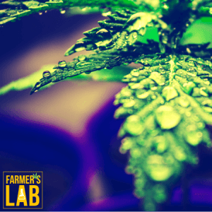 Marijuana Seeds Shipped Directly to Fox Point, WI. Farmers Lab Seeds is your #1 supplier to growing Marijuana in Fox Point, Wisconsin.