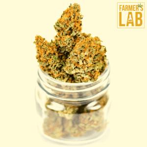 Marijuana Seeds Shipped Directly to Gilbert, AZ. Farmers Lab Seeds is your #1 supplier to growing Marijuana in Gilbert, Arizona.