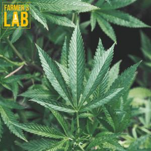 Marijuana Seeds Shipped Directly to Grovetown, GA. Farmers Lab Seeds is your #1 supplier to growing Marijuana in Grovetown, Georgia.