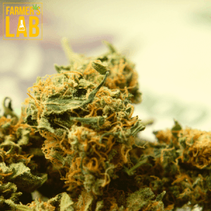 Marijuana Seeds Shipped Directly to Junction City, KS. Farmers Lab Seeds is your #1 supplier to growing Marijuana in Junction City, Kansas.