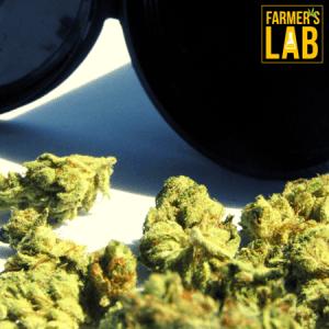 Marijuana Seeds Shipped Directly to La Riviera, CA. Farmers Lab Seeds is your #1 supplier to growing Marijuana in La Riviera, California.
