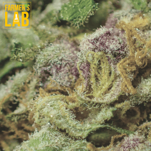 Marijuana Seeds Shipped Directly to Lac-Delage, QC. Farmers Lab Seeds is your #1 supplier to growing Marijuana in Lac-Delage, Quebec.