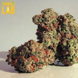 Marijuana Seeds Shipped Directly to Lantana, FL. Farmers Lab Seeds is your #1 supplier to growing Marijuana in Lantana, Florida.