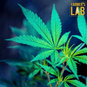 Marijuana Seeds Shipped Directly to Laredo, TX. Farmers Lab Seeds is your #1 supplier to growing Marijuana in Laredo, Texas.