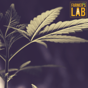 Marijuana Seeds Shipped Directly to London, ON. Farmers Lab Seeds is your #1 supplier to growing Marijuana in London, Ontario.