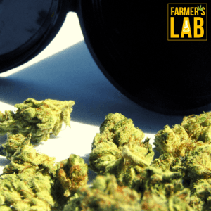 Marijuana Seeds Shipped Directly to McComb, MS. Farmers Lab Seeds is your #1 supplier to growing Marijuana in McComb, Mississippi.