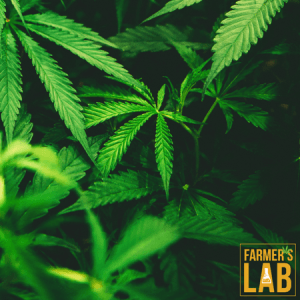 Marijuana Seeds Shipped Directly to McFarland, WI. Farmers Lab Seeds is your #1 supplier to growing Marijuana in McFarland, Wisconsin.
