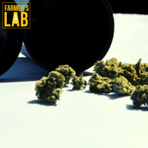 Marijuana Seeds Shipped Directly to Melville, SK. Farmers Lab Seeds is your #1 supplier to growing Marijuana in Melville, Saskatchewan.