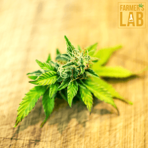 Marijuana Seeds Shipped Directly to Mercier, QC. Farmers Lab Seeds is your #1 supplier to growing Marijuana in Mercier, Quebec.