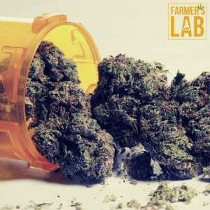 Marijuana Seeds Shipped Directly to Milford, OH. Farmers Lab Seeds is your #1 supplier to growing Marijuana in Milford, Ohio.