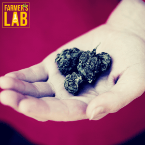 Marijuana Seeds Shipped Directly to Your Door. Farmers Lab Seeds is your #1 supplier to growing Marijuana in Missouri.