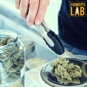 Marijuana Seeds Shipped Directly to Moncton, NB. Farmers Lab Seeds is your #1 supplier to growing Marijuana in Moncton, New Brunswick.