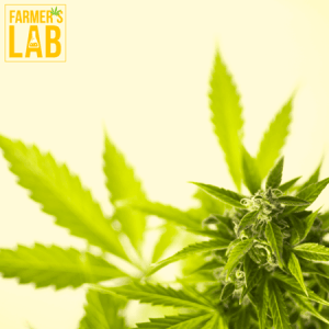 Marijuana Seeds Shipped Directly to Your Door. Farmers Lab Seeds is your #1 supplier to growing Marijuana in New Brunswick.