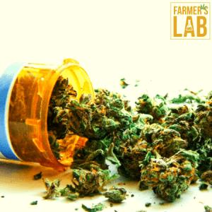 Marijuana Seeds Shipped Directly to Nhulunbuy, NT. Farmers Lab Seeds is your #1 supplier to growing Marijuana in Nhulunbuy, Northern Territory.