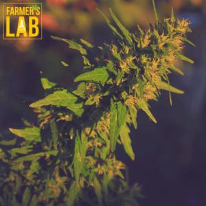 Marijuana Seeds Shipped Directly to Palmyra, NJ. Farmers Lab Seeds is your #1 supplier to growing Marijuana in Palmyra, New Jersey.