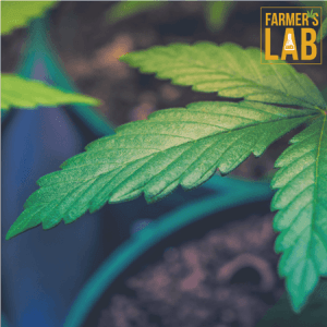 Marijuana Seeds Shipped Directly to Saint-Georges, QC. Farmers Lab Seeds is your #1 supplier to growing Marijuana in Saint-Georges, Quebec.