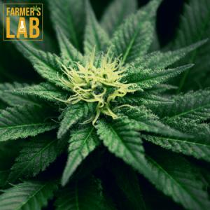 Marijuana Seeds Shipped Directly to Saint-Joseph-de-Beauce, QC. Farmers Lab Seeds is your #1 supplier to growing Marijuana in Saint-Joseph-de-Beauce, Quebec.
