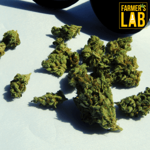 Marijuana Seeds Shipped Directly to Saint-Sauveur, QC. Farmers Lab Seeds is your #1 supplier to growing Marijuana in Saint-Sauveur, Quebec.