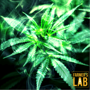 Marijuana Seeds Shipped Directly to Sainte-Therese, QC. Farmers Lab Seeds is your #1 supplier to growing Marijuana in Sainte-Therese, Quebec.