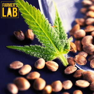 Marijuana Seeds Shipped Directly to Saratoga Springs, UT. Farmers Lab Seeds is your #1 supplier to growing Marijuana in Saratoga Springs, Utah.