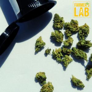 Marijuana Seeds Shipped Directly to Shoreline, WA. Farmers Lab Seeds is your #1 supplier to growing Marijuana in Shoreline, Washington.