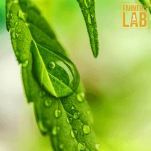 Marijuana Seeds Toronto, ON. Farmers Lab Seeds is your #1 supplier to growing Marijuana in Toronto, Ontario.