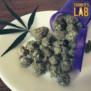 Marijuana Seeds Shipped Directly to Weyburn, SK. Farmers Lab Seeds is your #1 supplier to growing Marijuana in Weyburn, Saskatchewan.