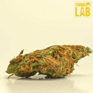 Marijuana Seeds Shipped Directly to Woodburn, VA. Farmers Lab Seeds is your #1 supplier to growing Marijuana in Woodburn, Virginia.