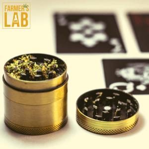 Marijuana Seeds Shipped Directly to York, NE. Farmers Lab Seeds is your #1 supplier to growing Marijuana in York, Nebraska.