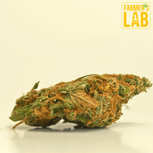 Weed Seeds Shipped Directly to Amos, QC. Farmers Lab Seeds is your #1 supplier to growing weed in Amos, Quebec.