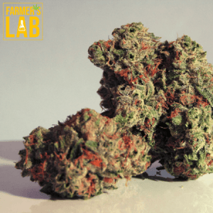 Weed Seeds Shipped Directly to Augusta, KS. Farmers Lab Seeds is your #1 supplier to growing weed in Augusta, Kansas.