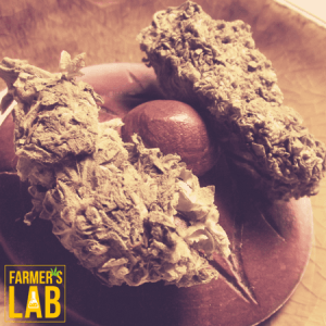 Weed Seeds Shipped Directly to Coober Pedy, SA. Farmers Lab Seeds is your #1 supplier to growing weed in Coober Pedy, South Australia.
