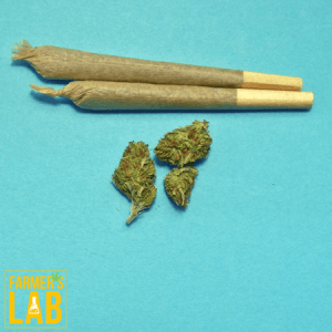 Weed Seeds Shipped Directly to Fargo, ND. Farmers Lab Seeds is your #1 supplier to growing weed in Fargo, North Dakota.