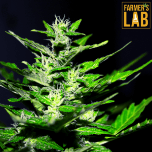 Weed Seeds Shipped Directly to Highland Heights, OH. Farmers Lab Seeds is your #1 supplier to growing weed in Highland Heights, Ohio.