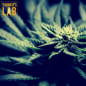 Weed Seeds Shipped Directly to Larose, LA. Farmers Lab Seeds is your #1 supplier to growing weed in Larose, Louisiana.