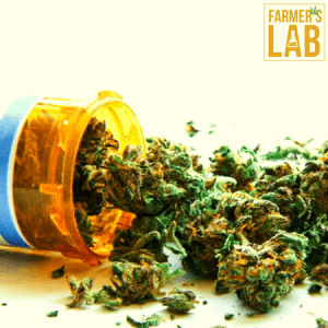 Weed Seeds Shipped Directly to North Tulsa, OK. Farmers Lab Seeds is your #1 supplier to growing weed in North Tulsa, Oklahoma.