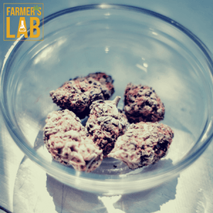 Weed Seeds Shipped Directly to Pratt, KS. Farmers Lab Seeds is your #1 supplier to growing weed in Pratt, Kansas.