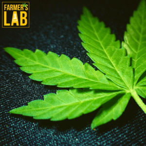 Weed Seeds Shipped Directly to Quantico Station, VA. Farmers Lab Seeds is your #1 supplier to growing weed in Quantico Station, Virginia.